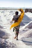 Salt arbeten, Sambhar salt lake, Rajasthan, Indien Royaltyfria Foton