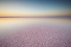 Salt and Brine of a pink lake, colored by microalgae Dunaliella salina at sunset. Brine and salt of a pink lake, colored by microalgae Dunaliella salina at Royalty Free Stock Image