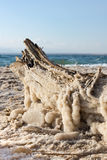 Salt Covered Dead Sea Driftwood Royalty Free Stock Images
