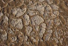 A salt crust. On desert sands  rn Stock Image