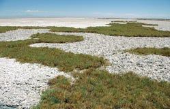 Salt Crust In Salar De Atacama Stock Images