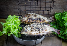 Salt crusted grilled nile tilapia fish Stock Photo