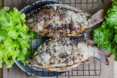 Salt crusted grilled nile tilapia fish Royalty Free Stock Photos