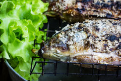 Salt crusted grilled nile tilapia fish Stock Images