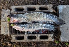 Salt Crusted Grilled Snakehead Fish stock photography