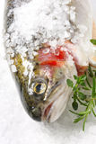 Salt-crusted Trout. Rainbow trout encrusted with sea salt, ready for cooking. With fresh rosemary and thyme royalty free stock photos