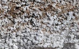 Salt crystallisation at coast of the Dead Sea, Jordan Stock Photo