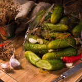 Salt cucumbers briefly stored Royalty Free Stock Photo