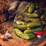 Salt cucumbers briefly stored Stock Images