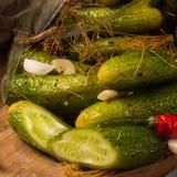 Salt cucumbers briefly stored Stock Photos