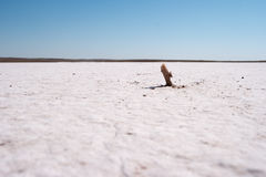 Salt desert close-up. Large salty space royalty free stock photos