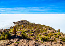 Salt Desert, Uyuni, Bolivia. Details of Fish Island covered by cactus plants in the middle of the Salt Flats Stock Images