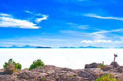 Salt Desert, Uyuni, Bolivia. Details of Fish Island covered by cactus plants in the middle of the Salt Flats Royalty Free Stock Photography