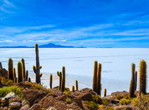 Salt Desert, Uyuni, Bolivia. Details of the rocky Fish Island in the middle of Bolivian Salt Flats Royalty Free Stock Images