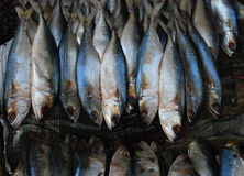 Salt dry fish Stock Photography