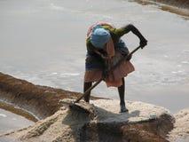 Salt salt extraction food industry India Royalty Free Stock Photo