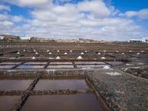 Salt extraktion Royaltyfri Fotografi