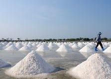 salt fält Arkivbild