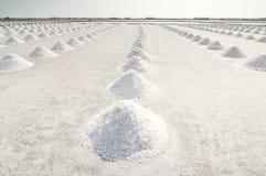 salt fält Royaltyfria Bilder