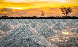 Salt farm in the morning with sunrise sky. Organic sea salt. Evaporation and crystallization of sea water. Raw material of salt. Industrial. Sodium Chloride royalty free stock image