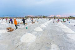 Salt farming career Stock Photo