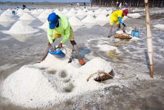Salt farming in Thailand Royalty Free Stock Photos