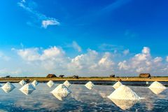 Salt fields Stock Images