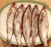 Salt fisk för arabisk egyptier arkivbild