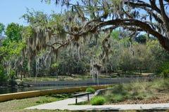 Salt fjädrar den WalkwayOcala nationalskogen, Florida arkivfoto