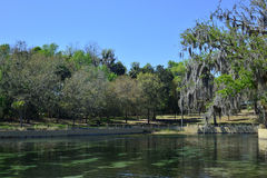 Salt fjädrar den Ocala nationalskogen Florida Arkivfoton
