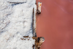 Salt on the ground from pink water lake. Pink water salt lake in Dominican Republic Royalty Free Stock Photos