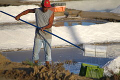 Salt harvesting Stock Photo