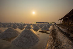 Salt harvesting in salt farm agriculture occupation in samuthson Royalty Free Stock Image