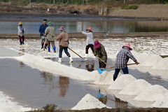 Salt Harvesting - Thailand Stock Photography
