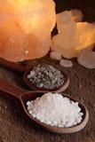 salt havssked Royaltyfri Bild