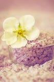 salt havswhite för blomma Arkivfoton