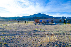 Salt hotel in the desert, Uyuni, Bolivia. Panorama- dog and people playing football at the salt hotel Royalty Free Stock Photo