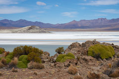 Salt Lake on the Altiplano Royalty Free Stock Image