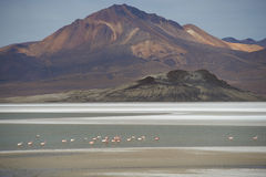 Salt Lake on the Altiplano Royalty Free Stock Photography