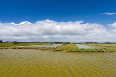 Salt lake at French Oleron island. Landscape with salt lake at French Oleron island stock image