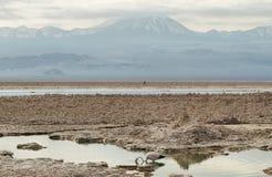 Salt lake lagoon Chaxa Royalty Free Stock Image