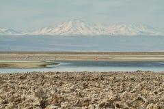 Salt lake lagoon Chaxa Stock Image
