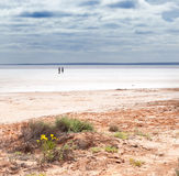 Salt lake Lake Hart. Lake Hart is a salt lake in South Australia very pretty but harsh conditions stock photo