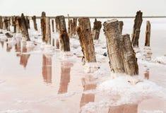Salt Lake med rosa färgvatten Royaltyfria Bilder
