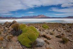 Salt Lake na Altiplano Obrazy Royalty Free