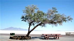 Salt Lake nell'Utah immagini stock libere da diritti