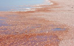 Salt Lake rosa in Namibia fotografia stock