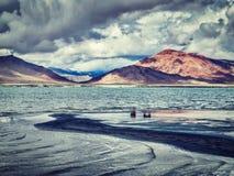 Salt lake Tso Kar in Himalayas. Ladakh, India Royalty Free Stock Photo