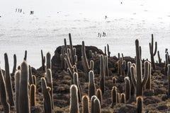 Salt lake Uyuni in Bolivia Stock Photography