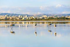 Salt lake in Larnaka stock images